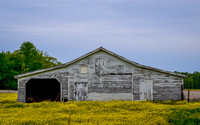 White Barn and Buttercups