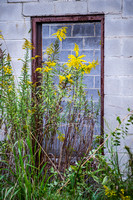 Open Door, Yellow Flowers