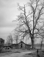 Tree Over Barn, Black and White